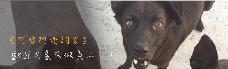 愛心集食 X 烏日阿雪阿媽狗園 │提供阿嬤最實質的幫助,讓阿嬤不用為了飼料煩惱